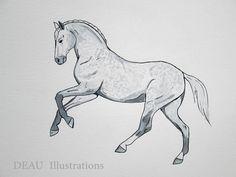 Horse Pencil Drawing, Pencil Drawings Of Animals, Horse Drawings, Animal Sketches, Art Sketches, Art Drawings, Kwpn Horse, Arte Equina, Horse Sketch