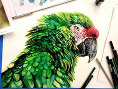 Ilustraciones de animales hechas con plumones y colores - Taringa!