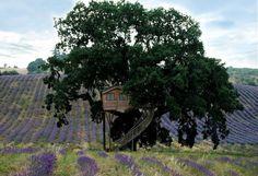 La Casa sull'Albero - Suite Bleue | Case sull'albero | La Piantata, I would love to stay here.
