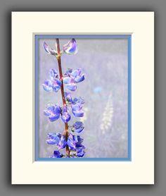 Colorado Wildflower Photo Purple Penstemon by JulieMagersSoulen, $24.95