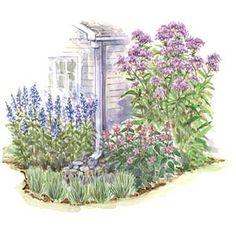 Downspout Garden Plan (1-Hydrangea Snow Queen, 3-Arythium Pictum/Japanese painted fern, 5-Black-leaved Ligularia, 3-Japanese Forest Grass)