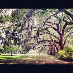 I mean these trees…so beautiful! #Savannah