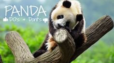 Searching With: Google Panda 4.1 Leaked Dos and Don'ts