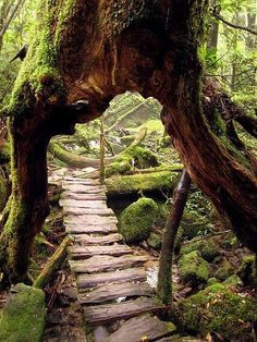 1) A split in this old tree creates a secrete path to the forest