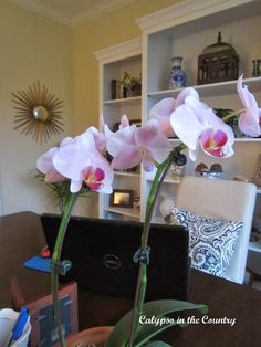 Orchid in Home Office Reveal