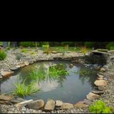 Water features such as a pond, fountain, or waterfall are almost always the first thing that catches the attention of your guests. That's why these are one of the most popular ideas for landscaping today! Water is naturally very relaxing, so it makes sense that people would want to have water in their gardens.