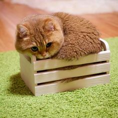Snug fit. Cat in a box.