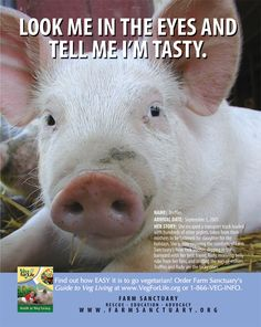Choose compassion. (Notice they pick the cute pig, not the stupid chicken...but the sentiment is the same...)