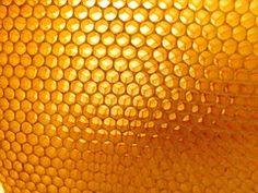 Kennomaisen Rakenteen, Mehiläishoidon