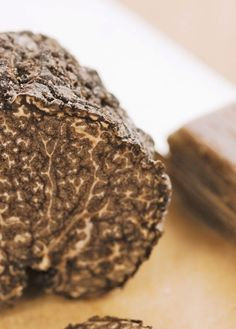 Become a truffle hunter for the day at @Four Seasons Hotel Firenze. This gastronomic experience begins in the fields and continues with a gourmet dinner with a truffle menu designed by Executive Chef Vito Mollica.