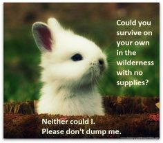 DONT release domestic rabbits into the wild! #rabbitwelfare