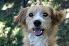 Dan, adorabile cagnetto di 1,5 anni... allegro e vivace cerca casa! Dan's a cute, happy pup looking for a home!  ADOTTATO!