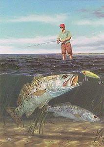 open invitation speckled trout fish paintings
