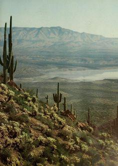 Desert/ cactus