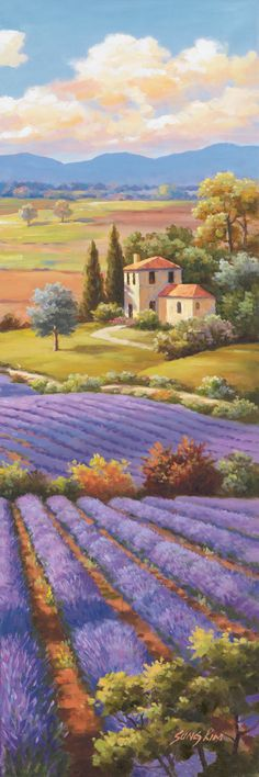 Fields of Lavender by Sung Kim -
