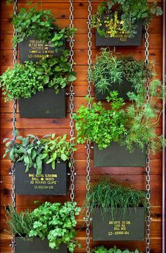 Vertical Herb Garden - Bing Images