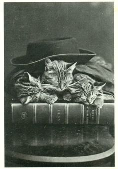 Time for Bed…. c.1870. Photo by H Pointer. S)