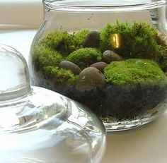 wonderful moss...my woods are full of moss and I love all these creative ideas!