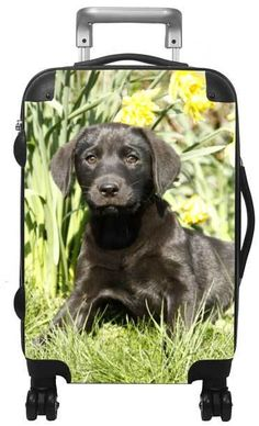 Lab Puppies - Kids luggage sets, backpacks and more. Free embroidery and personalization. Luggage for kids makes a great gift. Kids Luggage Sets, Homeless Dogs, Purebred Dogs, Lab Puppies, German Shepherd Puppies, Working Dogs, Happy Dogs, Big Dogs, Travel With Kids