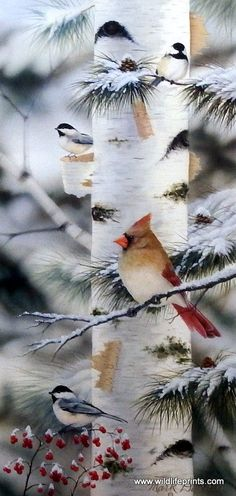 Mark Daehlin Feathered Friends II- Wrapped Canvas : Female Cardinal with Chickadees Print is a Canvas Wrap with Hanger Ready to go Image Size x Pretty Birds, Love Birds, Beautiful Birds, Animals Beautiful, Cute Animals, Illustration Noel, Cardinal Birds, Bird Pictures, Winter Pictures
