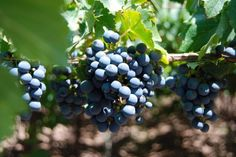 What to Drink Now: Robust Red Wines