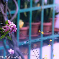 Pulizie di Primavera…. Fare ordine dentro e fuori