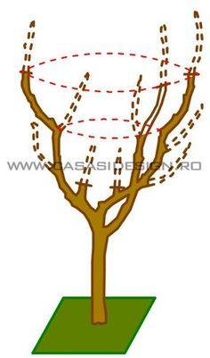 Grădină b tourism studies - Tourism Pruning Fruit Trees, Tree Pruning, Bonsai Tree Care, Bonsai Art, Vertical Garden Diy, Tower Garden, Growing Plants, Topiary, Garden Planning