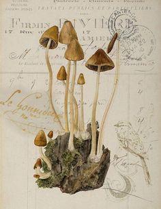 Botanical Mushroom Print
