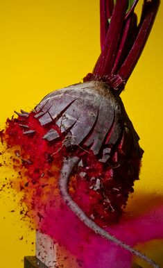 Alan Sailer's Delicious Pics Of Exploding Food And Toys