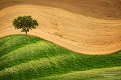 """Tree on the hill - Follow me on <a href=""""https://www.facebook.com/carmassi.marco""""> Facebook</a>"""
