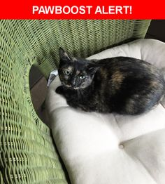 Is this your lost pet? Found in Cleveland, OH 44111. Please spread the word so we can find the owner!  Adult tortoiseshell cat. Green eyes.  On the small side, about 7.5-8 lbs. Very clean and healthy; sweet and obviously scared and unused to being outside, she cried constantly for the first few hours when not being petted. I found her outside my gate, hiding behind a potted plant. I will hold onto her until an owner is found.  Near Rainbow Ave & W 145th St