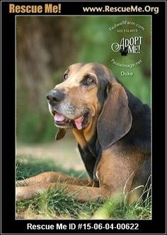 ― Arizona Black and Tan Coonhound Rescue ― ADOPTIONS ―RescueMe.Org