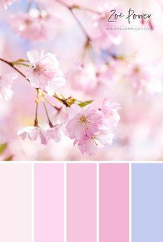 Cherry Blossom Colour Palette in pastel pinks and sky blue  © Zoë Power #colourpalette #pastelcolors #colorpalette #cherryblossom #pastelpink #pastelaesthetic Palette Art, Pastel Colour Palette, Blue Colour Palette, Pastel Colors, Pastel Blue, Pink Purple, Couleur Rose Pastel, Color Schemes Colour Palettes, Beach Color Schemes