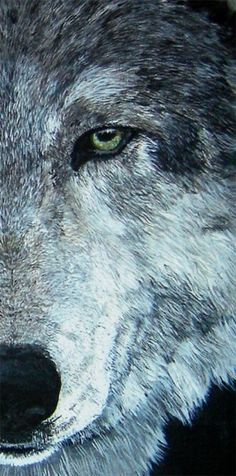 Wolf on canvas.