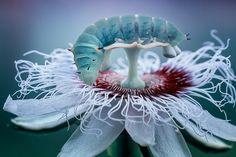 Caterpillar - null