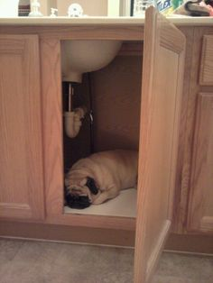 Every area in your home is a potential napping spot.