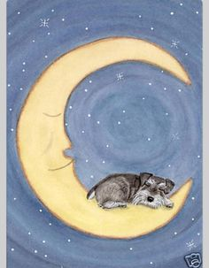 Good night all you beautiful schnauzers and your wonderful schnauzer parents.