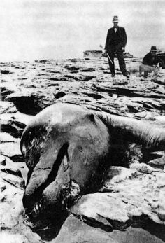 Take a look at the picture to the right. This was a picture taken of a dead creature that washed up on the coast of California. The thing had a neck 20 feet long and four flippers. Several people were eyewitnesses. http://forbidden-history.com/living-dinosaurs.html
