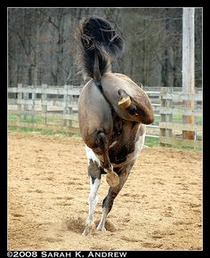 Point Taken! by Rock and Racehorses, via Flickr