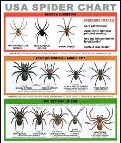 Great reference chart to ID spiders...I live in the Midwest (Indiana) so these particular spiders may or may not reside in your area.