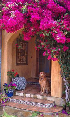 Bougainvillea-covered Spanish tiled archway—with a cute pooch to boot!