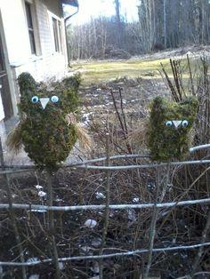 Pöllöjä.... Plants, Plant, Planets