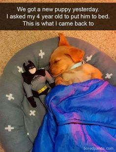 32 More Good Boy Dog Memes To Help You Laugh Away Your Day - - schatz - animals Cute Animal Memes, Animal Jokes, Cute Animal Pictures, Cute Funny Animals, Funny Cute, Super Funny, Baby Pictures, Cute Puppies, Cute Dogs