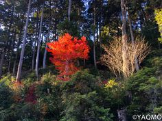 Autumn in Tranquil Tane District of Shiga Prefecture – Ohmi Kohoan Japanese Colors, Shiga, City, Plants, Cities, Plant, Planting, Planets