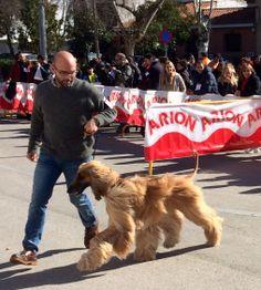 II Concurso Nacional Canino organizado por la Sociedad Canina de Castilla la Mancha, Recas (Toledo) #Recas #concursocanino