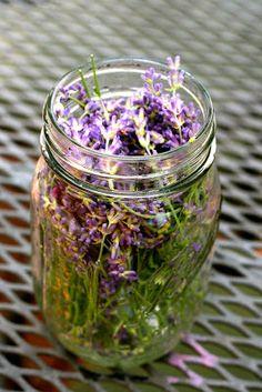 The Little Backyard Farm: How to make lavender oil Growing Lavender, Lavender Oil, Large Glass Jars, Side Garden, Backyard Farming, Jar Labels, Natural Cosmetics, Something To Do, Health Tips