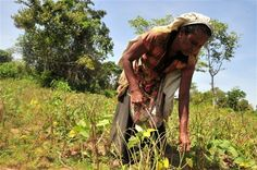 """Water resources in northern Sri Lanka, which are coming under increasing pressure as returning farmers use wasteful water pumps to irrigate their crops, need to be better managed, say experts.   """"Never before have water resources in the Northern Province been under such stress,"""" Thushyanthy Mikunthan, a senior lecturer at the Department of Agriculture at Jaffna University warned - http://irinnews.org/Report/97469/Water-mismanagement-in-northern-Sri-Lanka"""