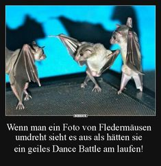 Wenn man ein Foto von Fledermäusen umdreht sieht.. | Lustige Bilder, Sprüche, Witze, echt lustig