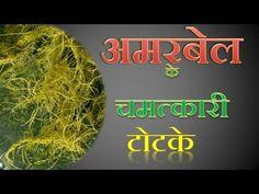 अमरबेल गंजेपन से लेकर बवासीर तक के रोग में रामबाण Bladness & Bawasir Treatment with Amarbel - YouTube