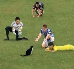 サッカー日本代表のゴールを守ってくれている川島永嗣選手!練習中や試合中など、その瞬間に収められた写真で、ボールと猫を入れ替えてみたら可愛すぎました!